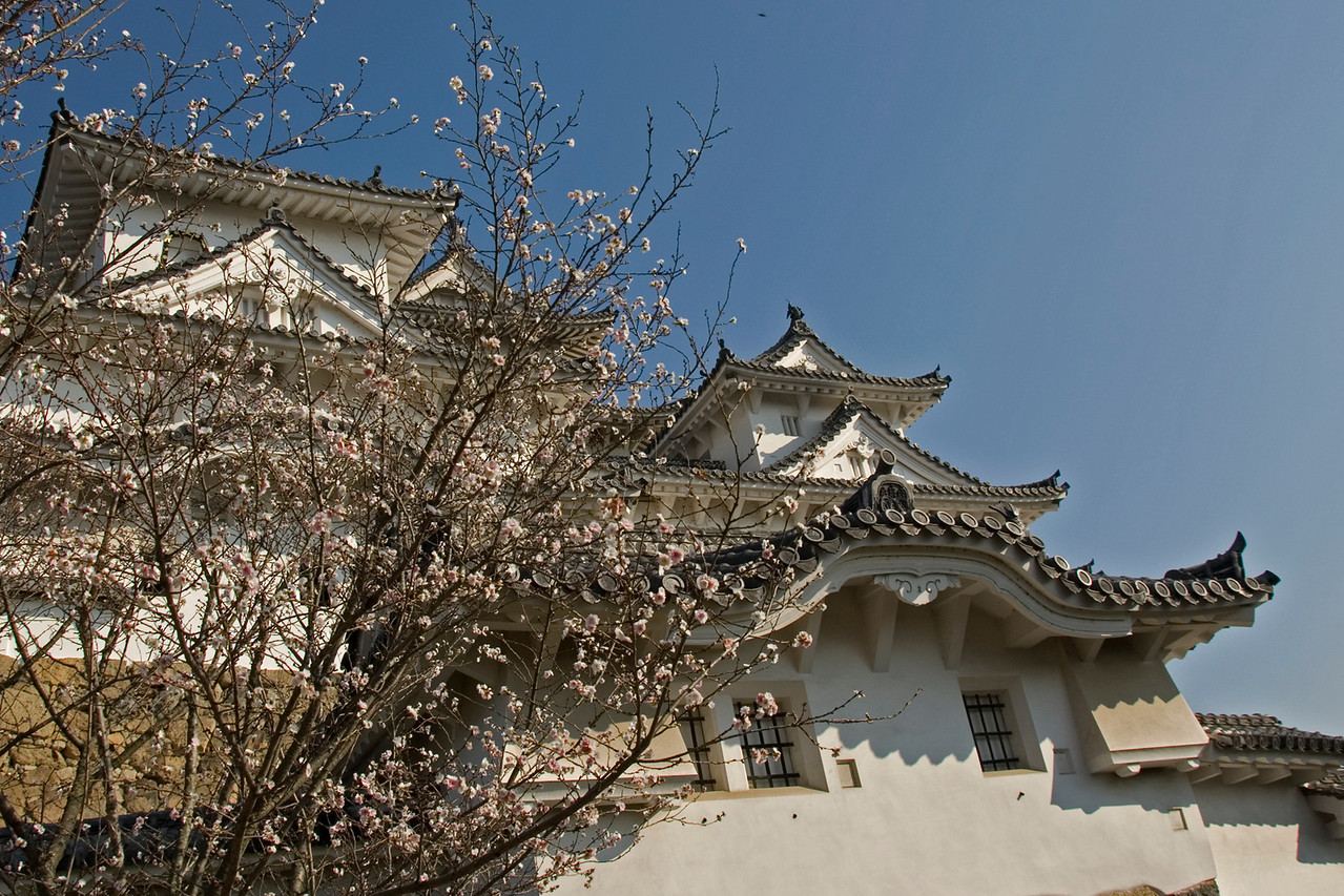 Beautiful blooming tree in front of Himeji Castle in Himeji, Japan