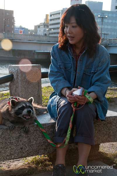 Walking a Raccoon in Hiroshima, Japan