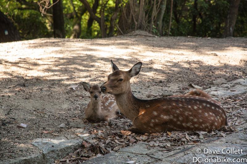 Deer..