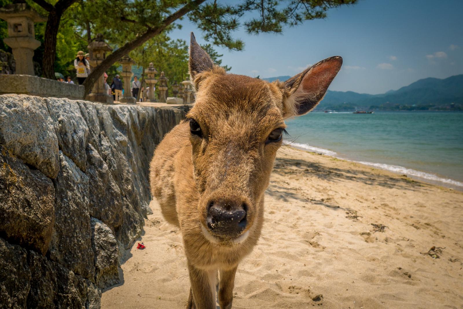bowing deer of japan