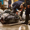 "Large tuna up for auction at <a target=""NEWWIN"" href=""http://en.wikipedia.org/wiki/Tsukiji_fish_market"">Tsukiji Fish Market</a>, Toyko, Japan"