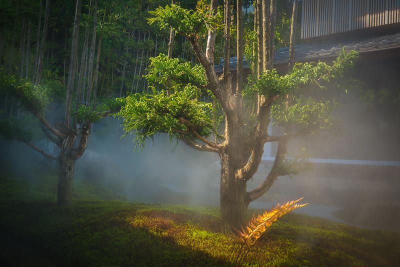 A stunning moss garden in Kamakura, Japan at the Hase-dera temple.