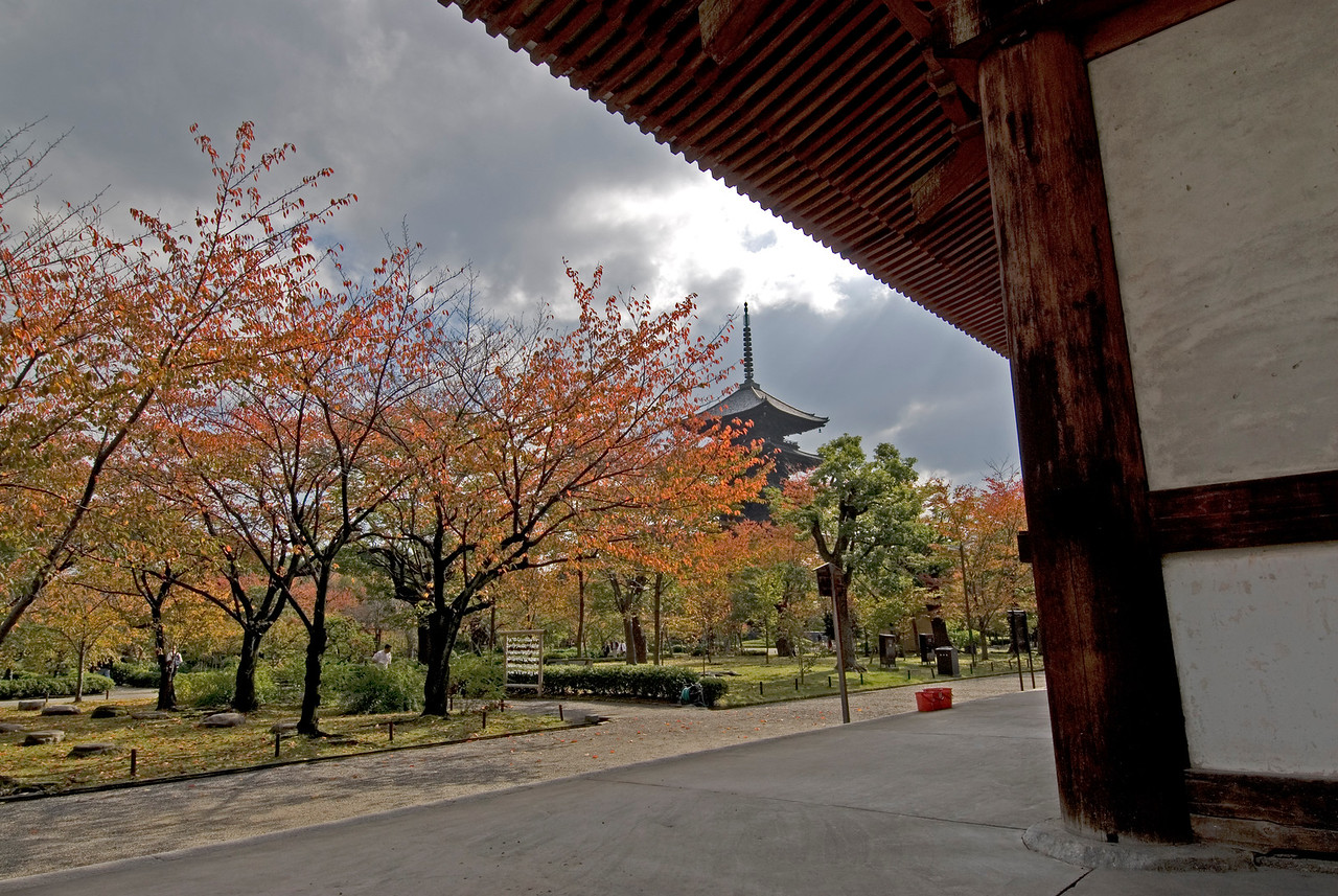 Shot of the autumn trees from Toji Temple in Kyoto, Japan