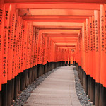 Fox Shrine Tori Gates – Kyoto, Japan – Daily Photo