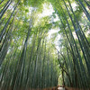 """<a target=""""NEWWIN"""" href=""""http://en.wikipedia.org/wiki/Arashiyama"""">Arashiyama</a> bamboo forest, Kyoto, Japan"""