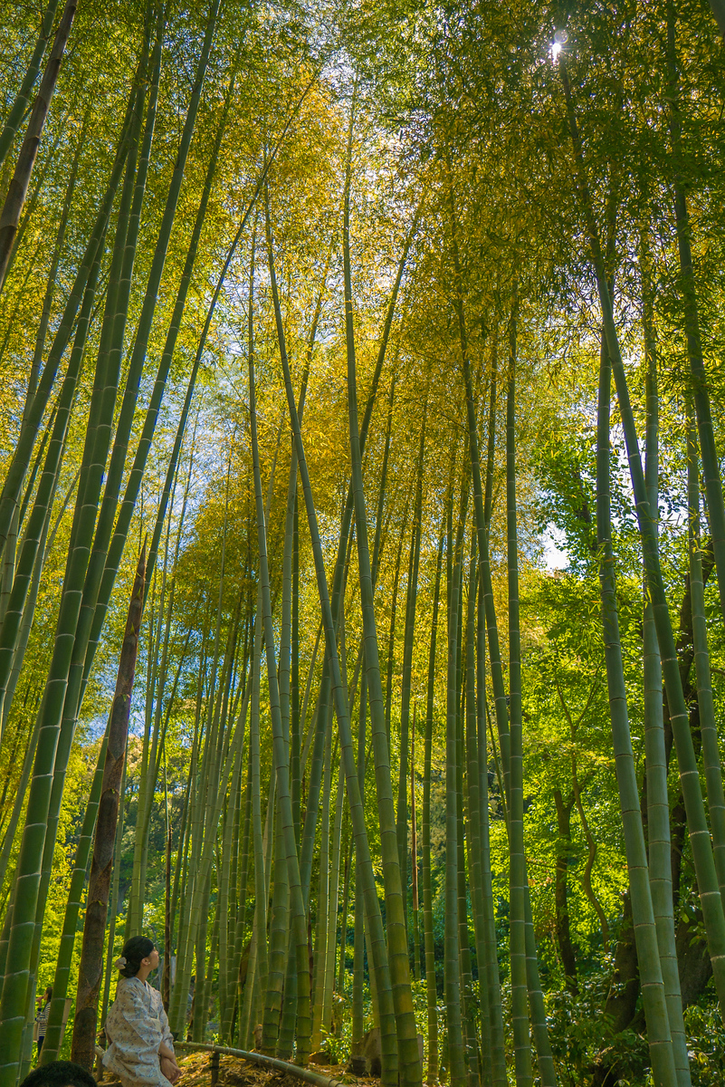 bamboo forest Kōdai-ji temple kyoto