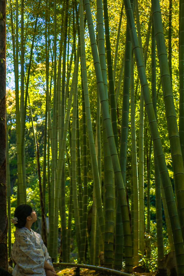 Beautiful bamboo forest at Kōdai-ji in Kyoto.