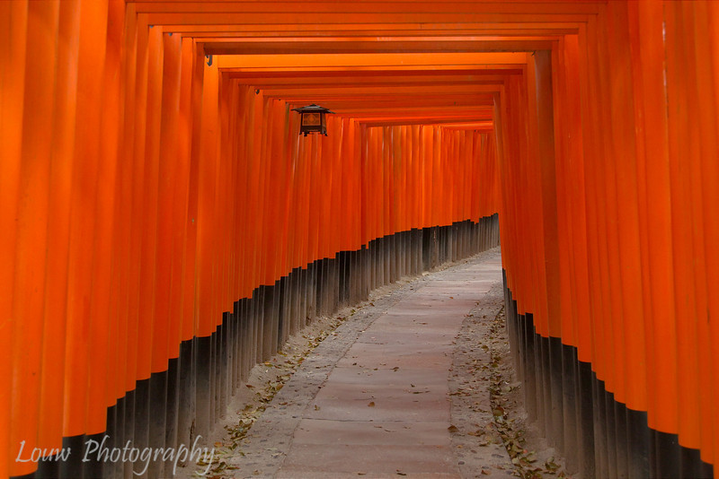 "<a target=""NEWWIN"" href=""http://en.wikipedia.org/wiki/Fushimi_Inari-taisha"">Fushimi Inari-taisha</a> shrine, Kyoto, Japan"
