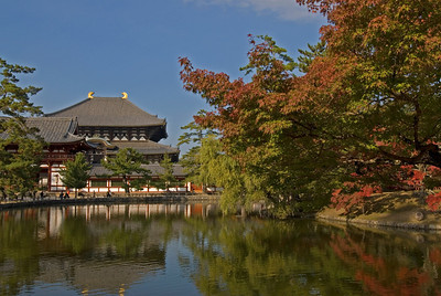 Autumn trees hanging low near the pond in Toadiji Temple - Nara, Japan