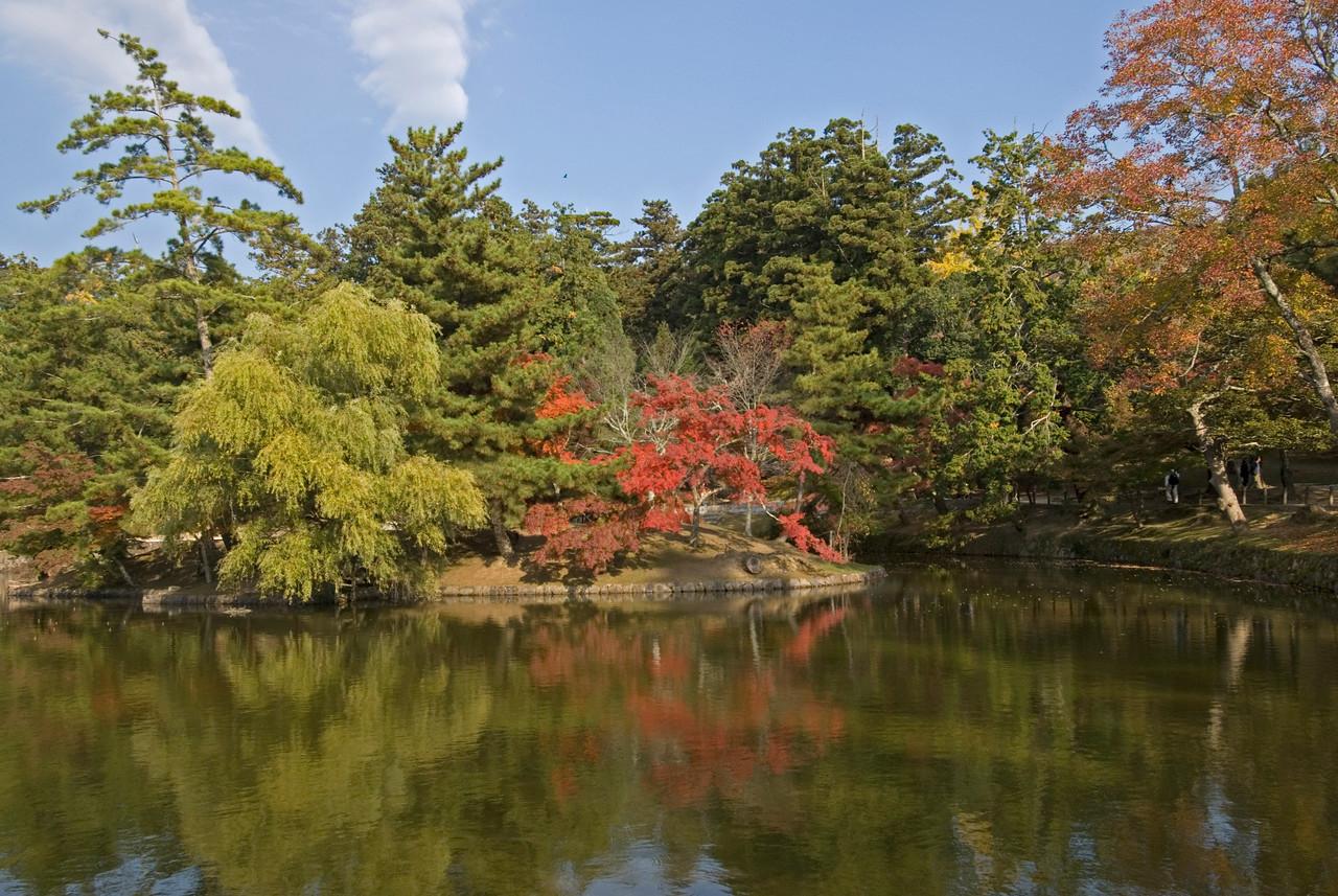 Lush greens and autumn trees at pond at Todaiji Temple - Nara, Japan