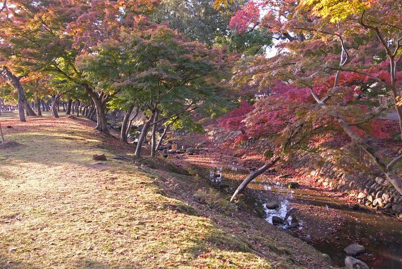 Beautiful autumn trees near a stream in Nara, Japan