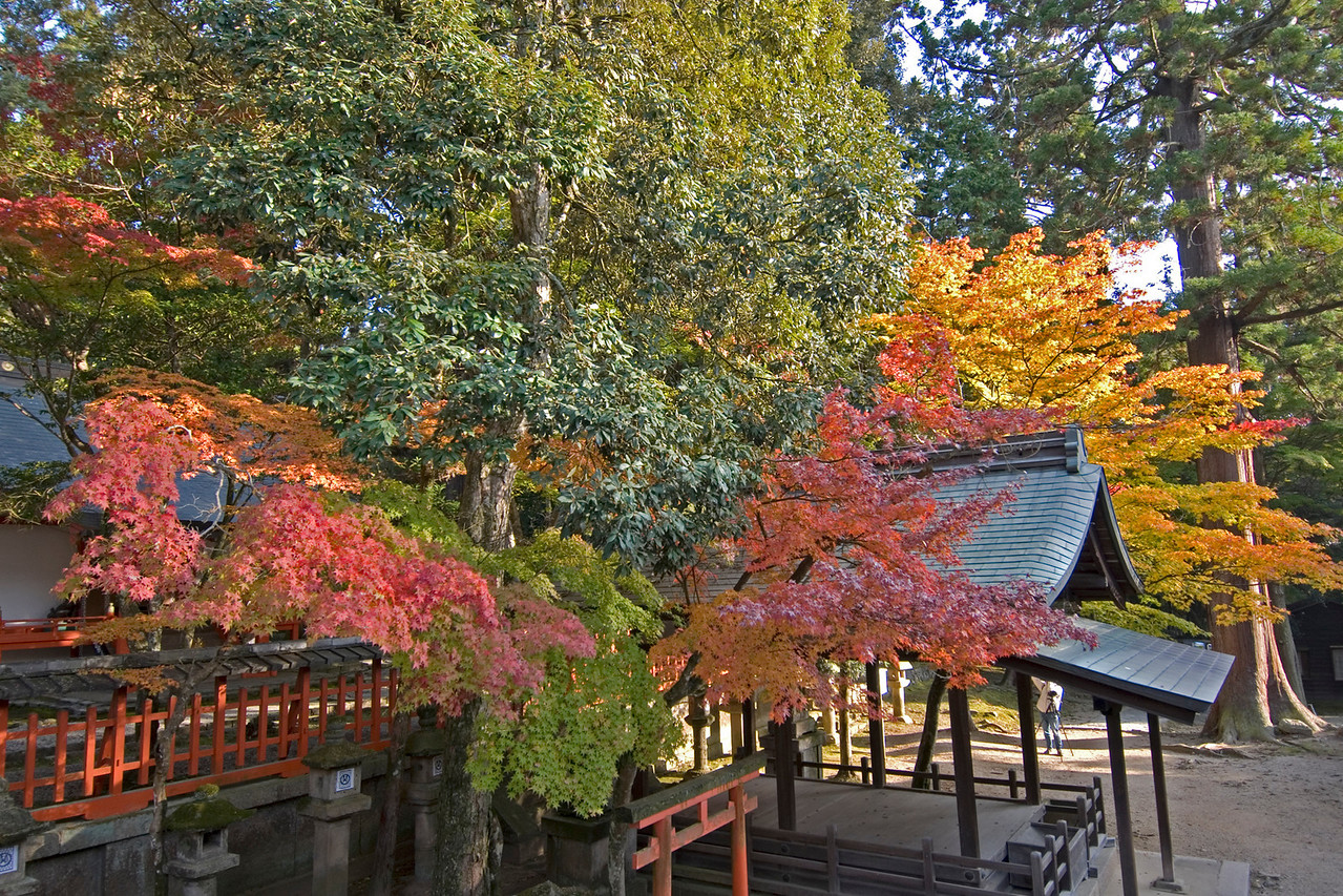 Colorful leaves from trees outside Nigatsu-dō Hall in Nara, Japan