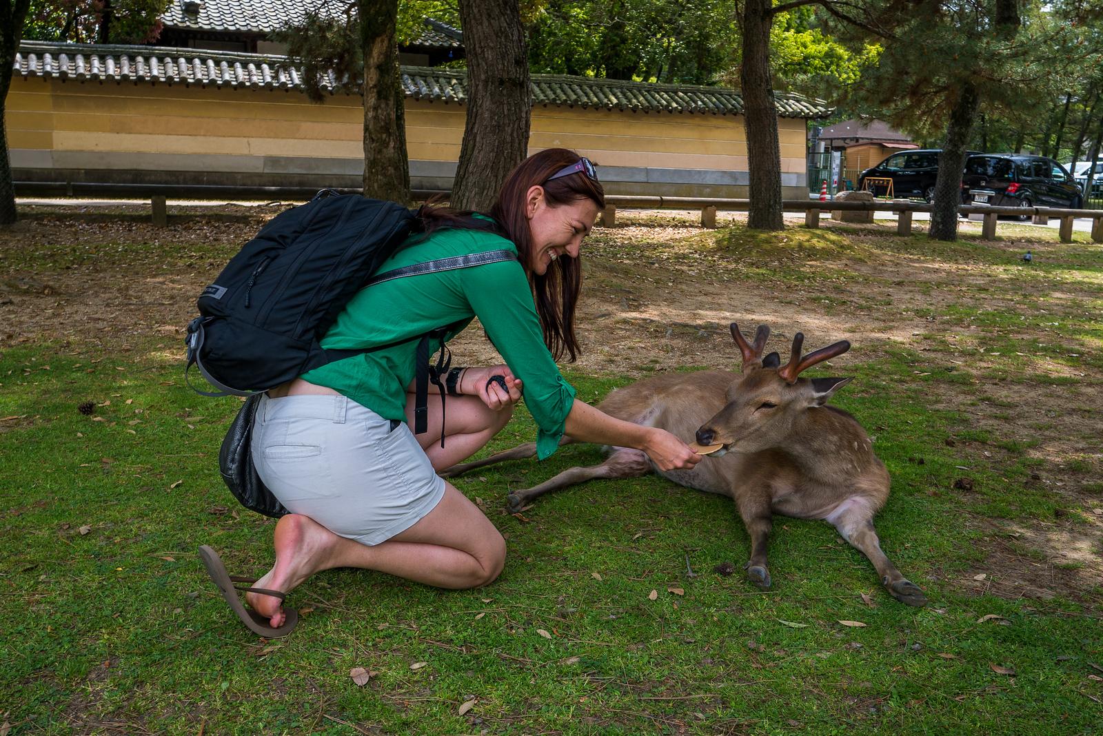 Bowing deer of Nara