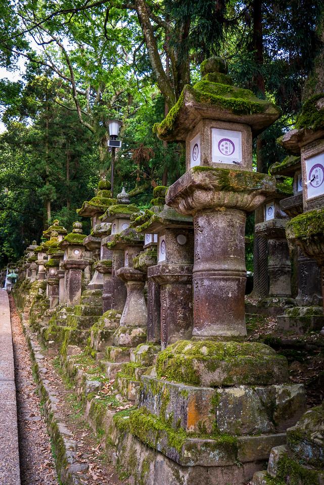 Stone lanterns lining the gorgeous pathways around the shrine.