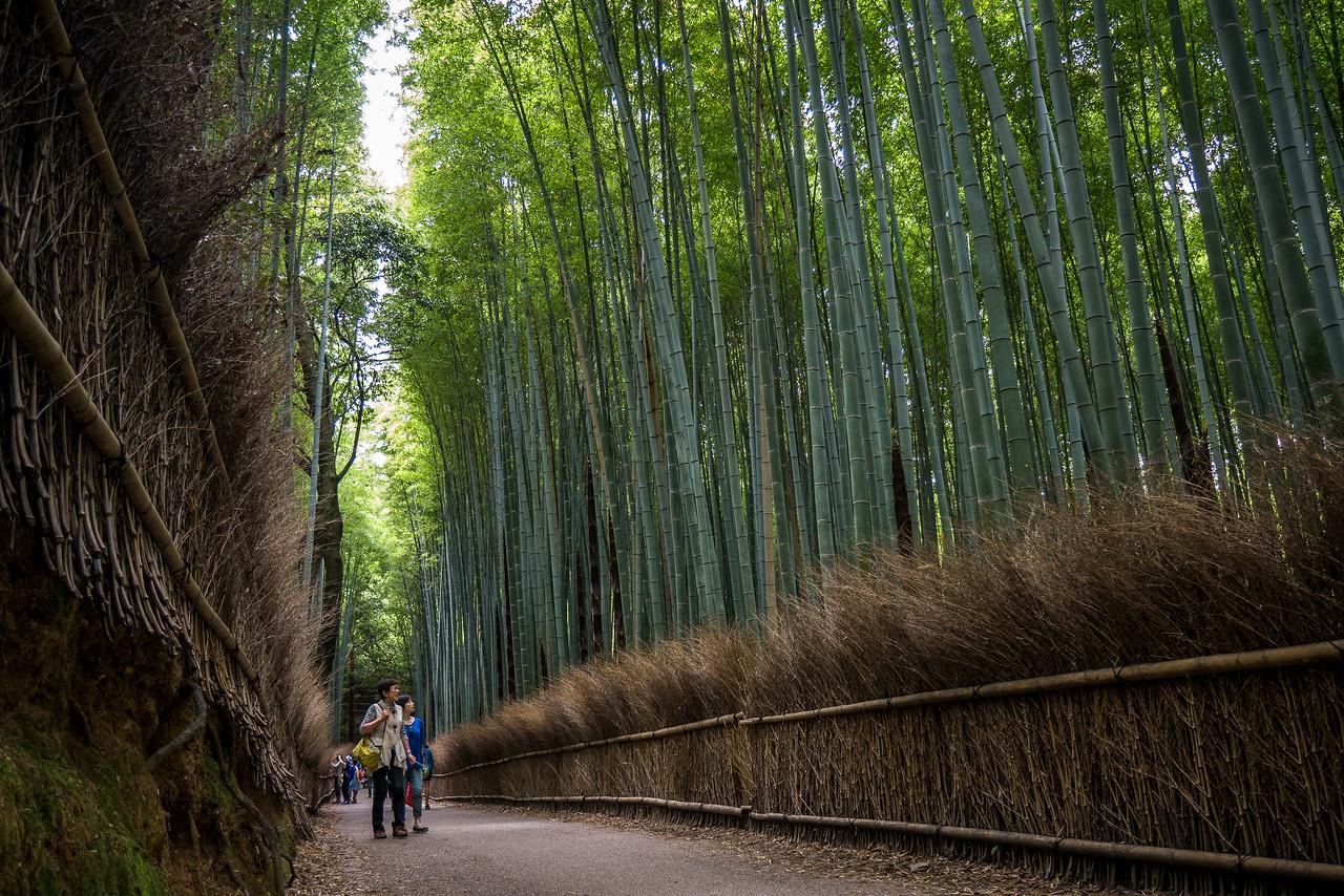 Arashiyama Bamboo Grove in the Arashiyama  District.