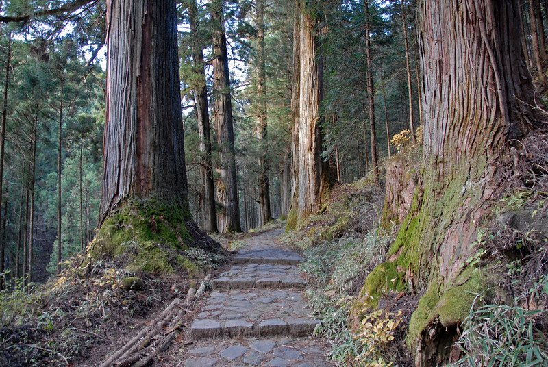 Tree-lined pathwalk at Nikko National Park in Japan