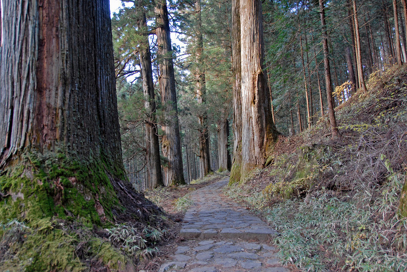 Paved path amidst thick forest in Nikko, Japan