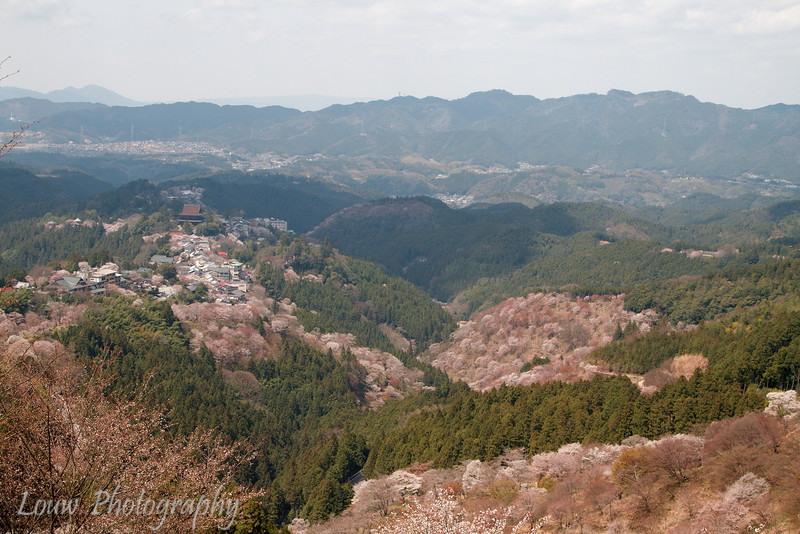 "<a target=""NEWWIN"" href=""http://en.wikipedia.org/wiki/Mount_Yoshino"">Mount Yoshino</a> during sakura season, Yoshino, Japan"