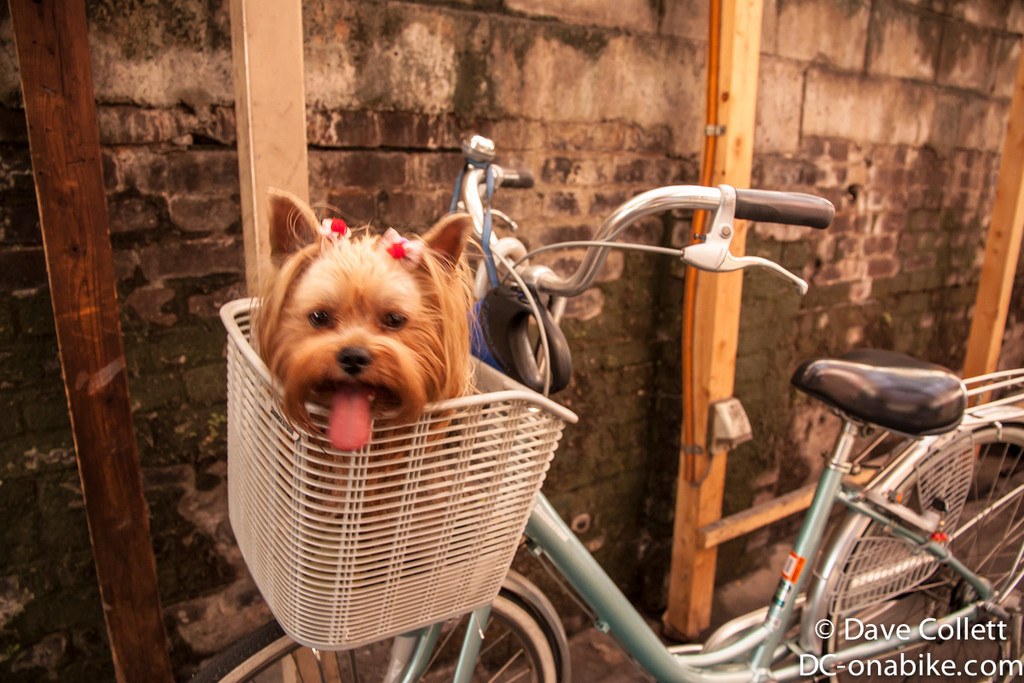 Dog on a bike…
