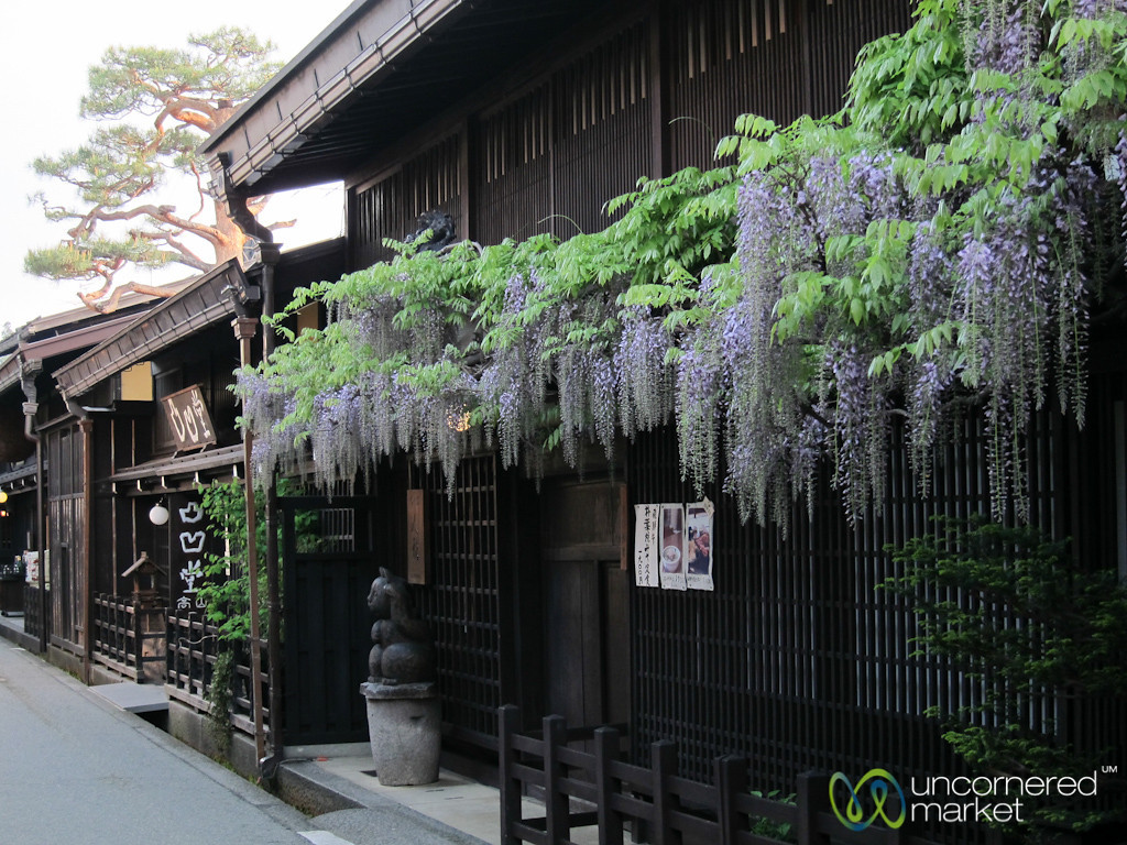 Wisteria Hanging on Old Buildings in Takayama, Japan