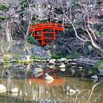 Koishikawa Korakuen Garden – Tokyo, Japan – Photo