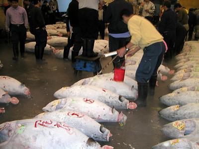 Auction area, Tsukiji fish market is located near the Tsukijishijō Station on the Toei Ōedo Line