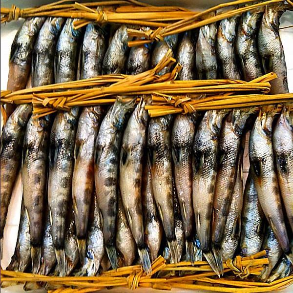 A bundle of ayu (river fish), Tsukiji market #Tokyo #dna2japan #gadv