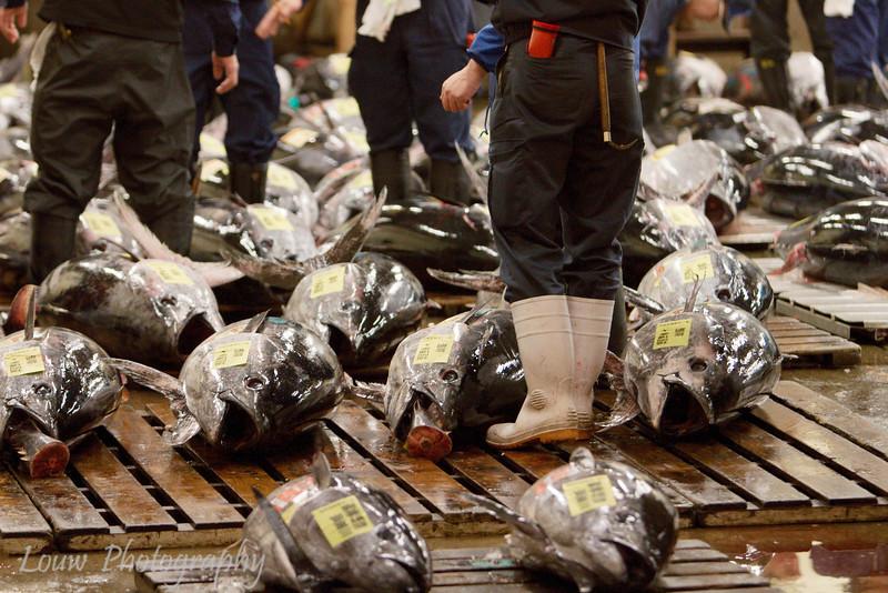 "Tuna auction at <a target=""NEWWIN"" href=""http://en.wikipedia.org/wiki/Tsukiji_fish_market"">Tsukiji Fish Market</a>, Toyko, Japan"