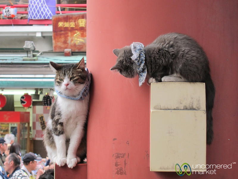 Cats at the Temple - Tokyo, Japan