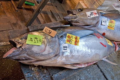 Fresh and massive tuna at a stall in Tsukiji Fish Market, Tokyo, Japan