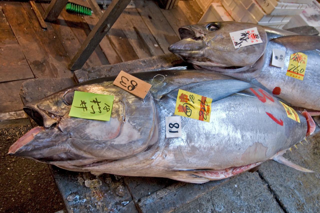 Fresh and massive tuna at a stall in Tsukiji Fish Market, Tokyo, Japan