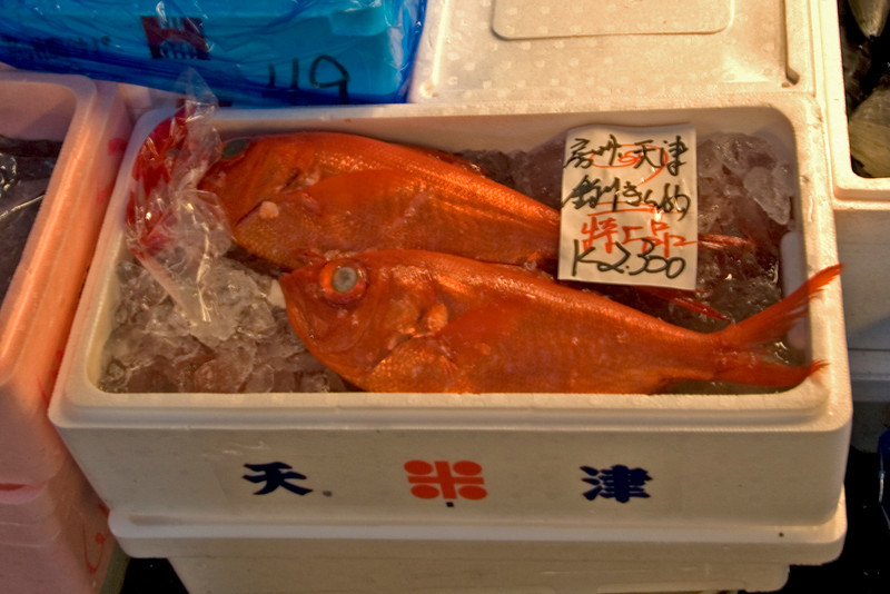 Close-up shot of snapper at Tsukiji Fish Market, Tokyo, Japan
