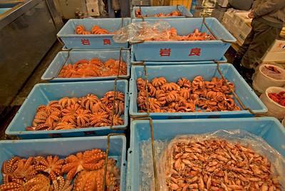 Bins filled with octopus at Tsukiji Fish Market, Tokyo, Japan
