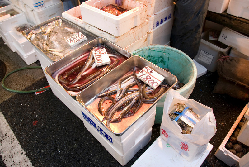 Eels sold at fish vendor stall in Tsukiji Fish Market, Tokyo, Japan