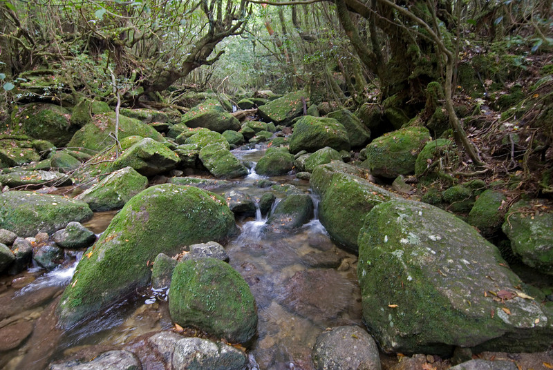 Calm creek in Shiratani Unsuikyo in Yakushima, Japan