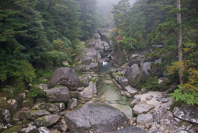 Beautiful shot of the creek in Yakusugi Cedar Grove in Yakushima, Japan