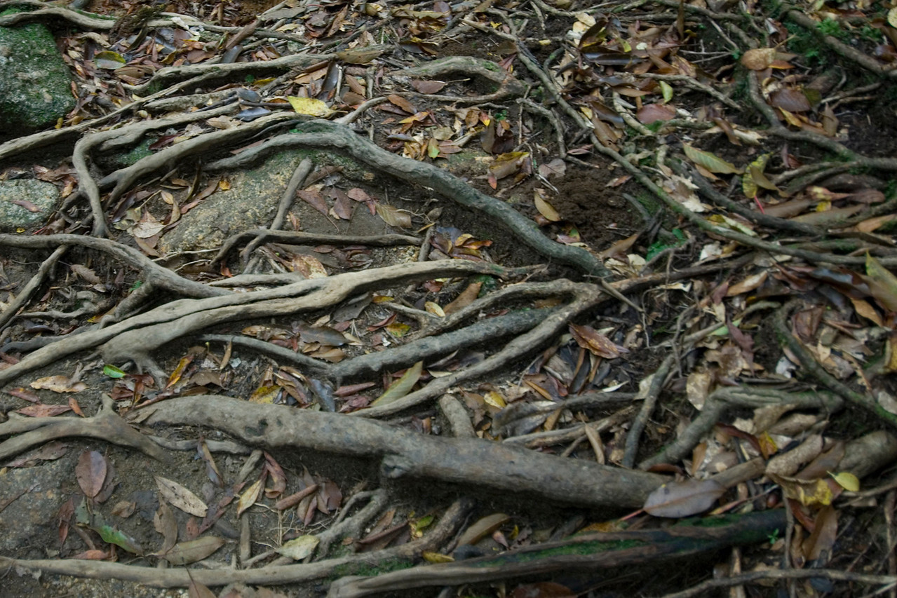 Fallen twigs and branches on the forest floor in Yakushima, Japan