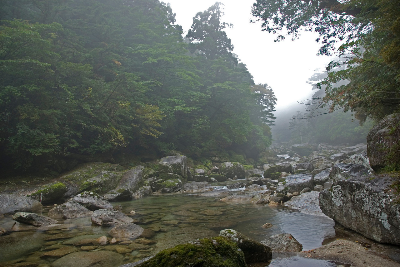 Shot of a small clearing in rock-filled creek in Yakushima, Japan