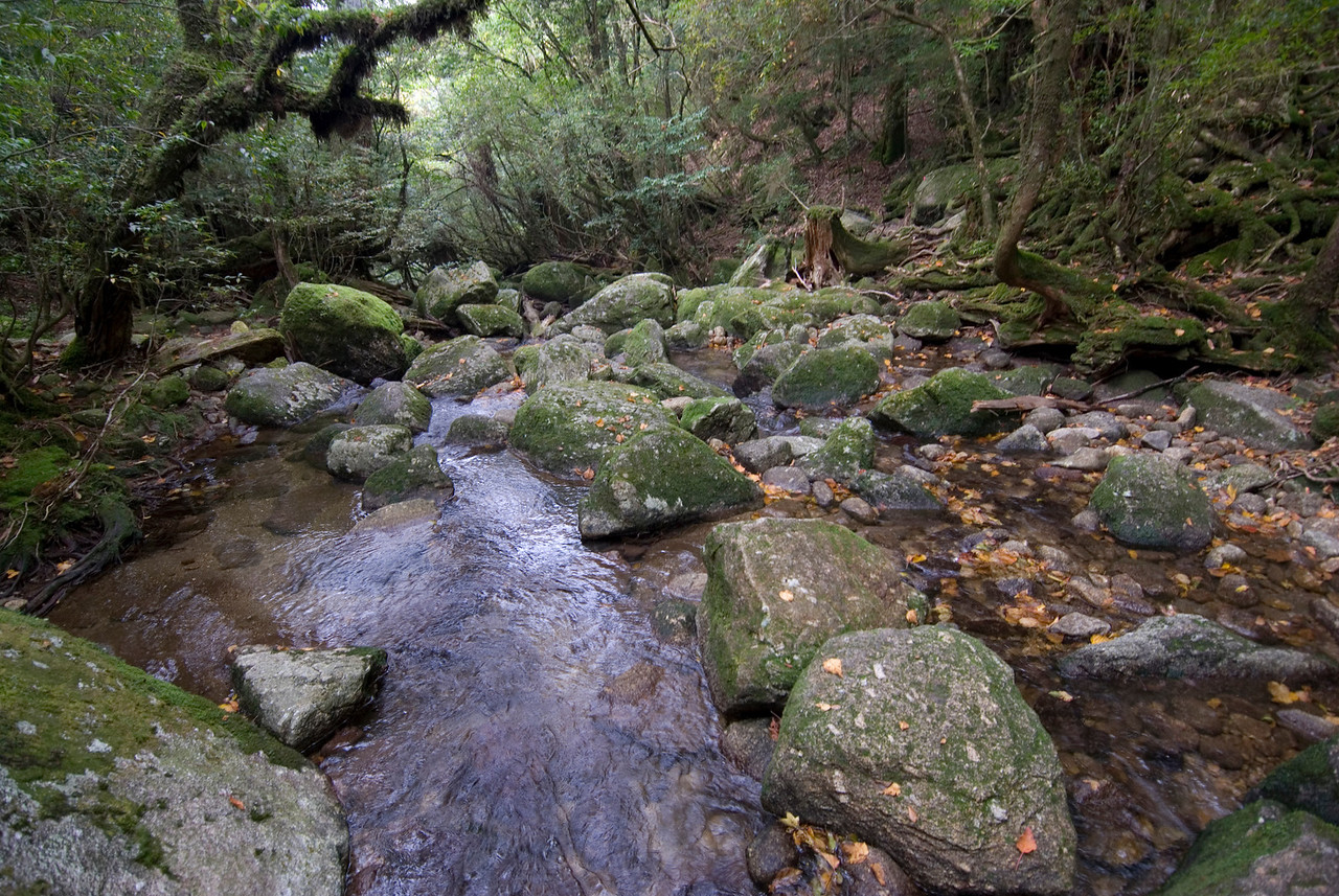More trees and rocks at a shallow part of creek in Shiratani Unsuikyo in Yakushima