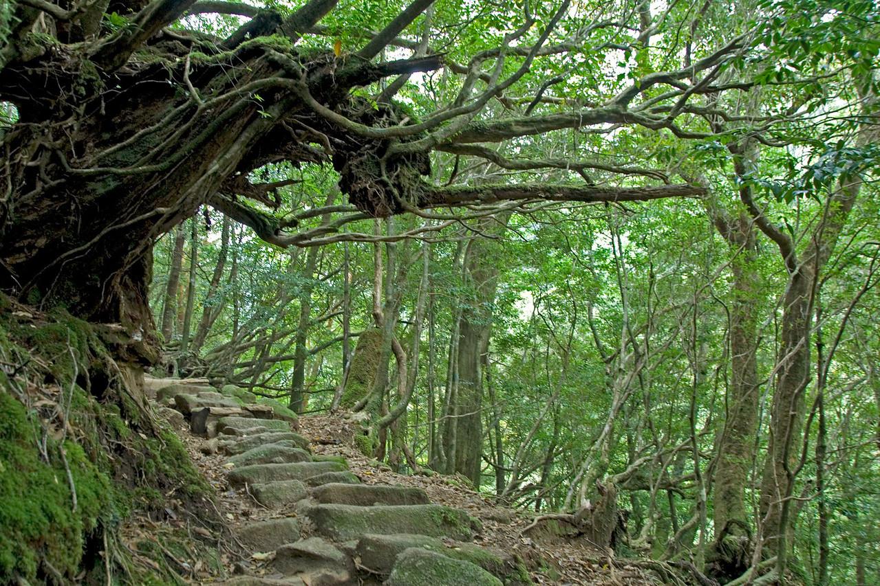 Stairs made of rocks in Shiratani Unsuikyo in Yakushima, Japan