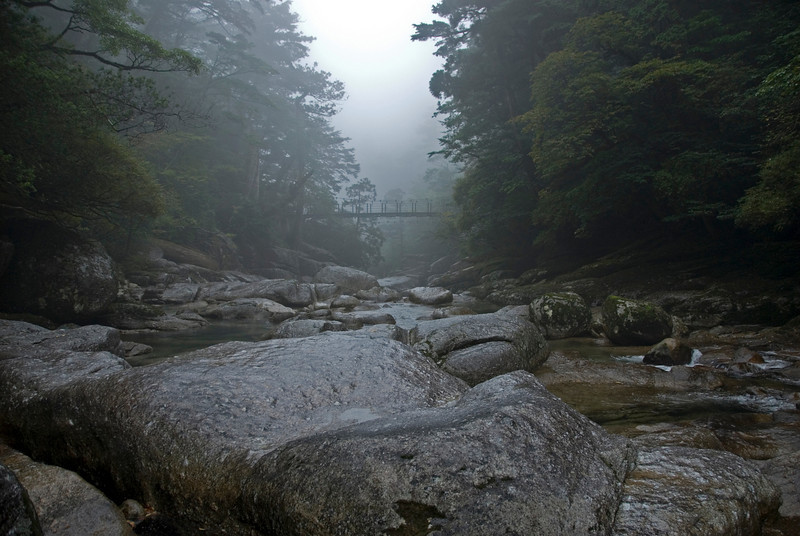 Fog covering the trees and bridge at Shiratani Unsuikyo in Yakushima, Japan