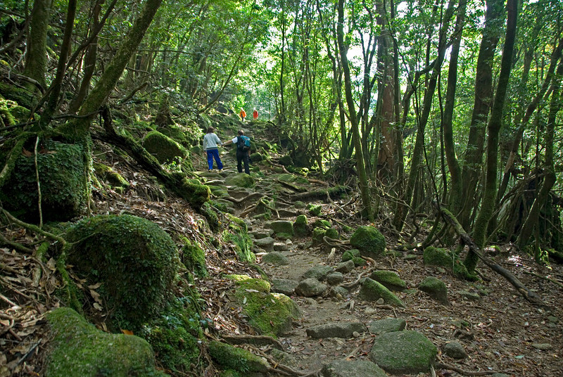 Couple holding hands while hiking in Shiratani Unsuikyo in Japan