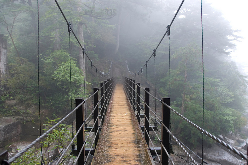 Fog-covered bridge in Yakusugi Cedar Grove in Yakushima, Japan