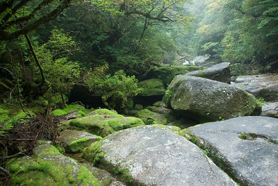 Boulders along the side of creek in Shiratani Unsuikyo in Yakushima, Japan
