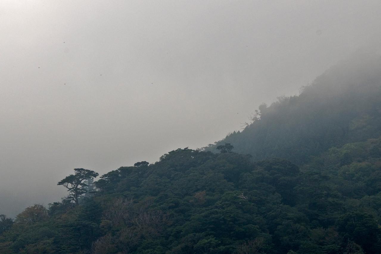 Fog covering the forest in Shiratani Unsuikyo in Yakushima, Japan