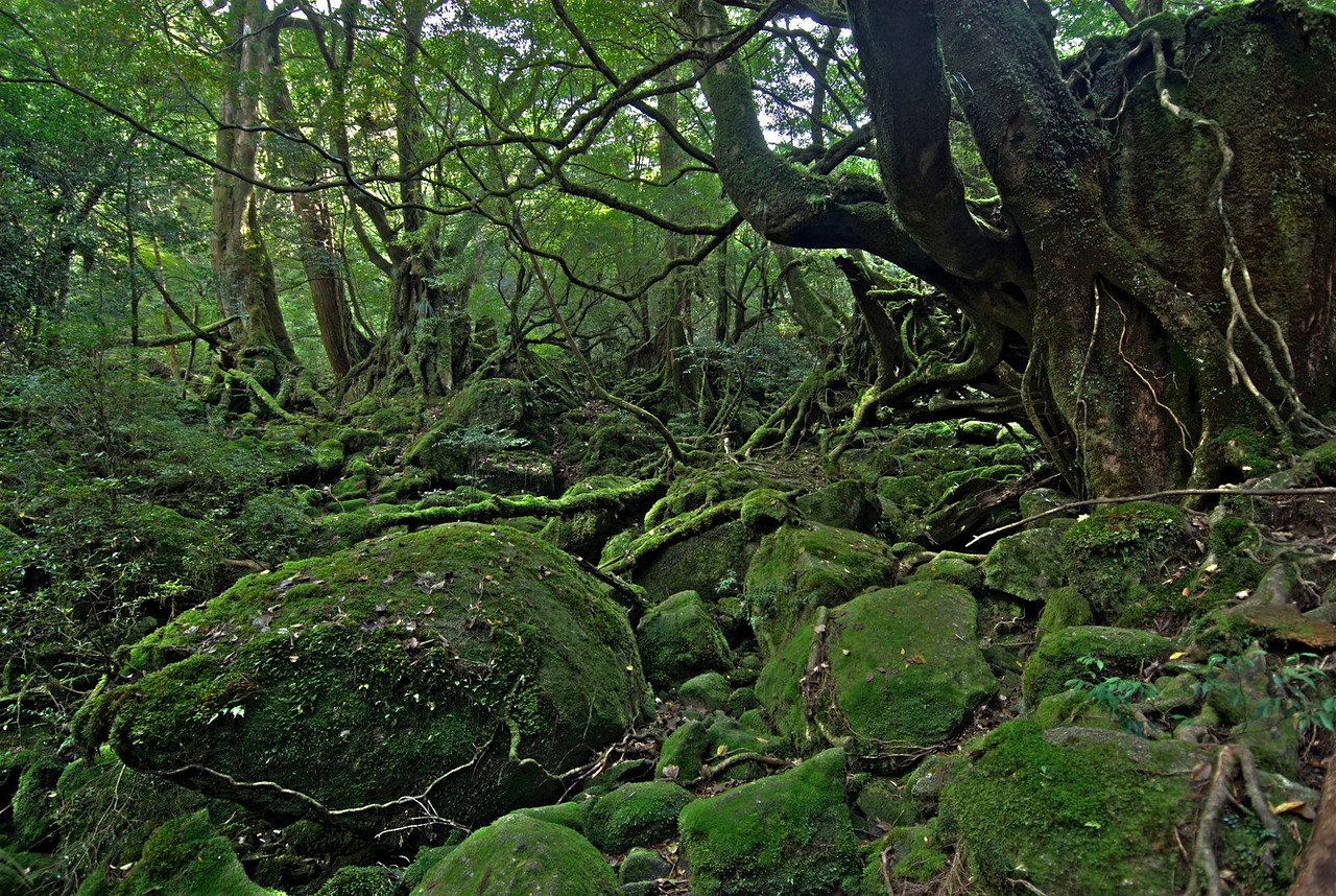 Enhanced shot of a pile of moss covered rocks in Shiratani Unsuikyo in Yakushima