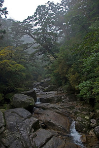 Beautiful shot of the calm creek and overhanging trees in Yakushima, Japan
