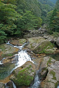 Beautiful shot of creek and nearby trees in Shiratani Unsuikyo in Yakushima, Japan