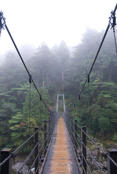 The stretch of a suspension bridge in Shiratani Unsuikyo in Yakushima, Japan