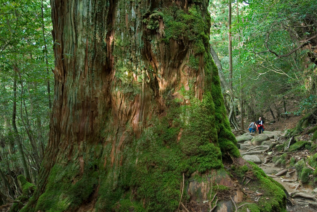 Tourists walking up the trail in Shiratani Unsuikyo - Yakushima, Japan